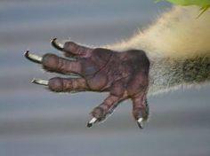 koala hand - Google Search