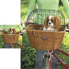 Going to get this for Norman this Summer!!