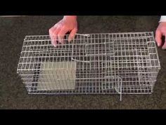 En speciel designet mosegrisefælde til levende fangst af mosegrise, stilles ovenpå et mosegrise hul http://elverdan.dk/shop/product_info.php?products_id=781