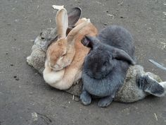rabbit sofa
