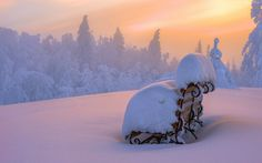 Zima, Las, Wschód Słońca, Ławka