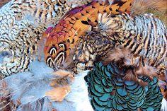 pretty game bird feathers