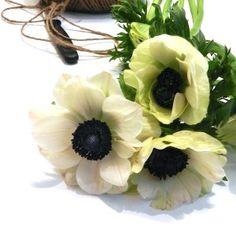 Kruunuvuokko - 'Anemone coronaria'. Kaunis talven kukka - kestää leikkona melko hyvin herkistä terälehdistä huolimatta.