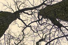 Blog fotograficzny z fotografiami drzew ,lasów ,parków.