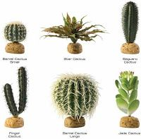 Examples of vegetative propagation asexual reproduction pictures