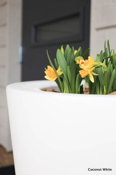 Kevään kukkia terassilla, huomenna se käynnistyy ja arvonnan voittaja | Coconut White