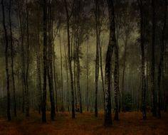 Dark #woods