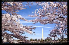Sunday Snapshot: Washington D.C., USA - The Cultureur   A Luxury Travel and Culture Blog