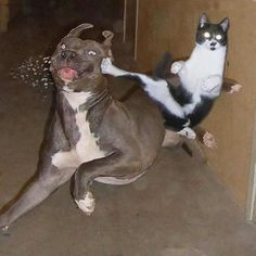 30 Cats That Are Secretly Fighting Ninjas – The Awesome Daily - Your daily dose of awesome