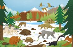 We were commissioned by Quarto to illustrate a book for their Wide Eyed range of non-fiction children's publications. It portrays various habitats from across the globe and highlights the roles of animals in nature.