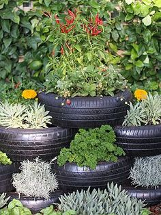 This is the tire herb garden my sister has been telling me about.  It's pretty #herbgardening