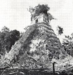 Temple 1 in Tikal Aztec Ruins, Mayan Ruins, Tikal, Mayan History, Ancient History, Maya Architecture, Mayan Cities, Temple Ruins, Paraiso Natural