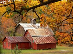 https://flic.kr/p/ak2U7L | Autumn Barns | Golden oaks and orange and yellow maple trees provide the backdrop for this cluster of weathered barns.  The barns are on M-22, north of Leland/Fish Town.
