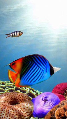 les fonds marins, la vie sous-marine, poissons tropicaux
