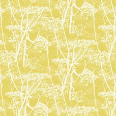 White cow parsley print on yellow by Cole & Son. Buy online from F&P Interiors. Feature Wallpaper, Wall Wallpaper, Pattern Wallpaper, Dandelion Wallpaper, Cole Son, Cole And Son Wallpaper, Cow Parsley, White Cow, Graphic Wallpaper