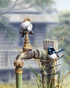 .birds... helping with the watering ~❥.
