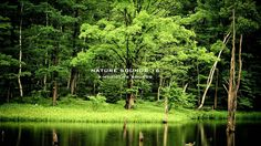 Nature Sound 16 - THE MOST RELAXING SOUNDS -