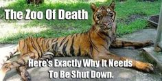 petition: Close Indonesia's Surabaya 'Zoo Of Death' NOW. How Many More Cases Of Animal Abuse Are Needed??