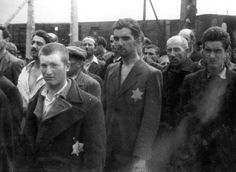 Auschwitz, selected for work - from the Auschwitz Album