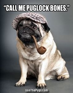 Join The Pugs! ...........click here to find out more http://googydog.com