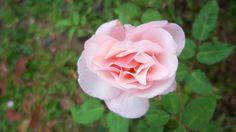 Veja 425 fotos de rafael donato dos santos no Flickr.