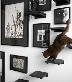 ¡Encuentra ideas variadas y prácticas para escalar paredes de gatos aquí! - ¡Encuentra ideas variadas y prácticas para escalar paredes de gatos aquí! Cat Climbing Wall, Cat Climbing Shelves, Cat Wall Shelves, Step Shelves, Shelf, Cat Stairs, Gatos Cats, Cat Playground, Cat Room
