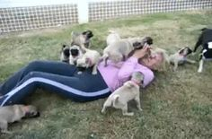 Pug Party!