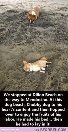 Chubby At The Dog Beach… So Cute!