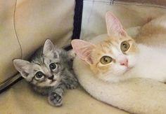 Tomoe-Kitten0825-1.jpg