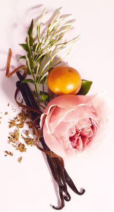 Ikebana Flower Arrangement, Flower Arrangements, Still Photography, Texture Photography, Food Photography, Botanical Drawings, Planting Flowers, Beautiful Flowers, Bloom