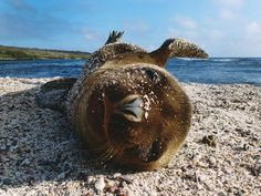 Galápagos Islands: remarkable yet preoccupying | Making Sense of ...