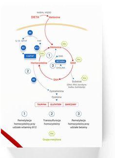 Homocystein-Intercell® | Metabolizm homocysteiny | Hiperhomocysteinemia | Miażdżyca żylna | Zakrzepica | Udar mózgu | Map, Location Map, Maps