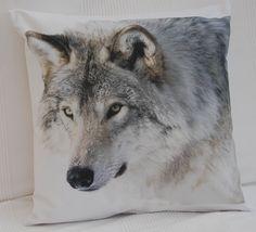 zwierzęta/ wilk