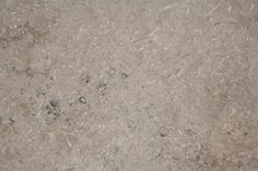 Swaledale Fossil Brown, Norrth Yorkshire light brown crinoidal limestone used in Durham Cathedral and York Minster floors - photo Britannicus Stone Durham Cathedral, York Minster, Marble Stones, Fossil, Kitchen Worktops, Latest Updates, Marbles, Yorkshire, Brown