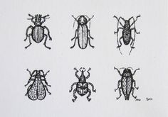 Mini Beetles  Insect Art Archival Print  Tiny Bug by OniOniOniArt, $5.00