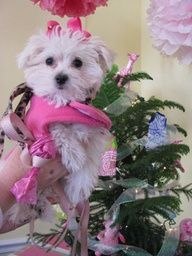 #LillyHoliday Tree + Puppy
