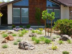 Low Maintenance Landscaping Ideas Front Yard
