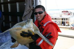 Sea Turtle Panama City Beach Release after rehab from cold stun events of 2010.    img_8191 by MyFWCmedia, via Flickr