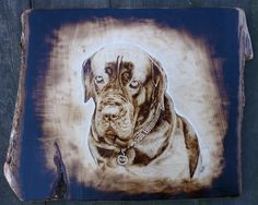 cane corso pyrography portrait