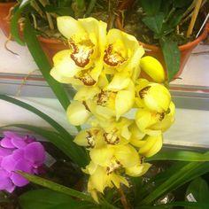 Orchids, always