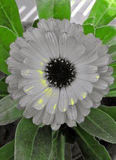 Stunning Marigold Flower