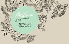 Herbs by Eili-Kaija Kuusniemi, via Behance
