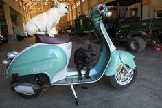 Frenchies & Scooters!