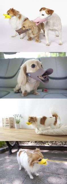 A duck-billed protective muzzle for dogs
