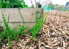 3 ways to manage weeds in the allotment garden