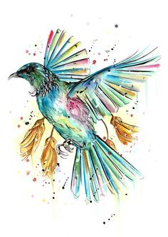 A bright and colourful rendition of one of our lovely Tui birds. Its always great seeing these birds in among the Kowhai flowers and watching them playfully engage with one another. Bird Line Drawing, Bird Drawings, Tui Bird, New Zealand Art, I Love The Beach, Watercolor Bird, Bird Art, Love Art, Illustration Art