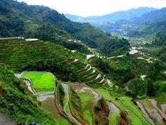 Rice Terraces, Banawe