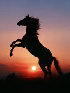 35 Most Beautiful Horse Pictures and Images | Horses: Real ...