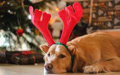 Christmas 2015 By Shaakai (DE)