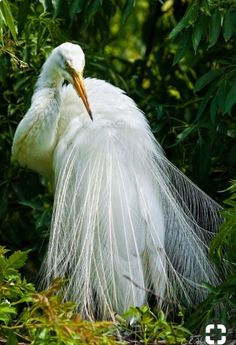 1240 Best Egrets Images In 2019 Birds Beautiful Birds